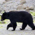 Lodí za medvědy v Tofino
