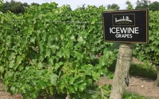 Deluxe Niagara Wine Tour