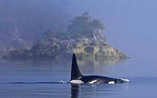 Tofino Ucluelet – pozorování velryb