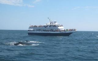 Pozorování velryb v Provincetown